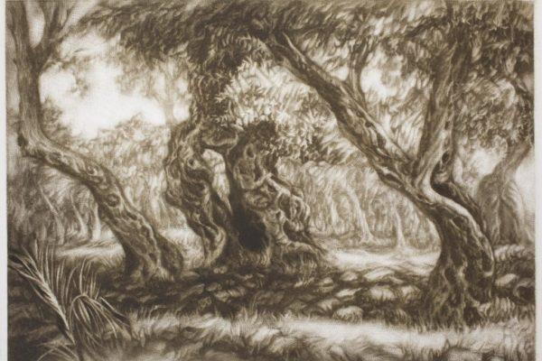 Оливы в Старом Баре